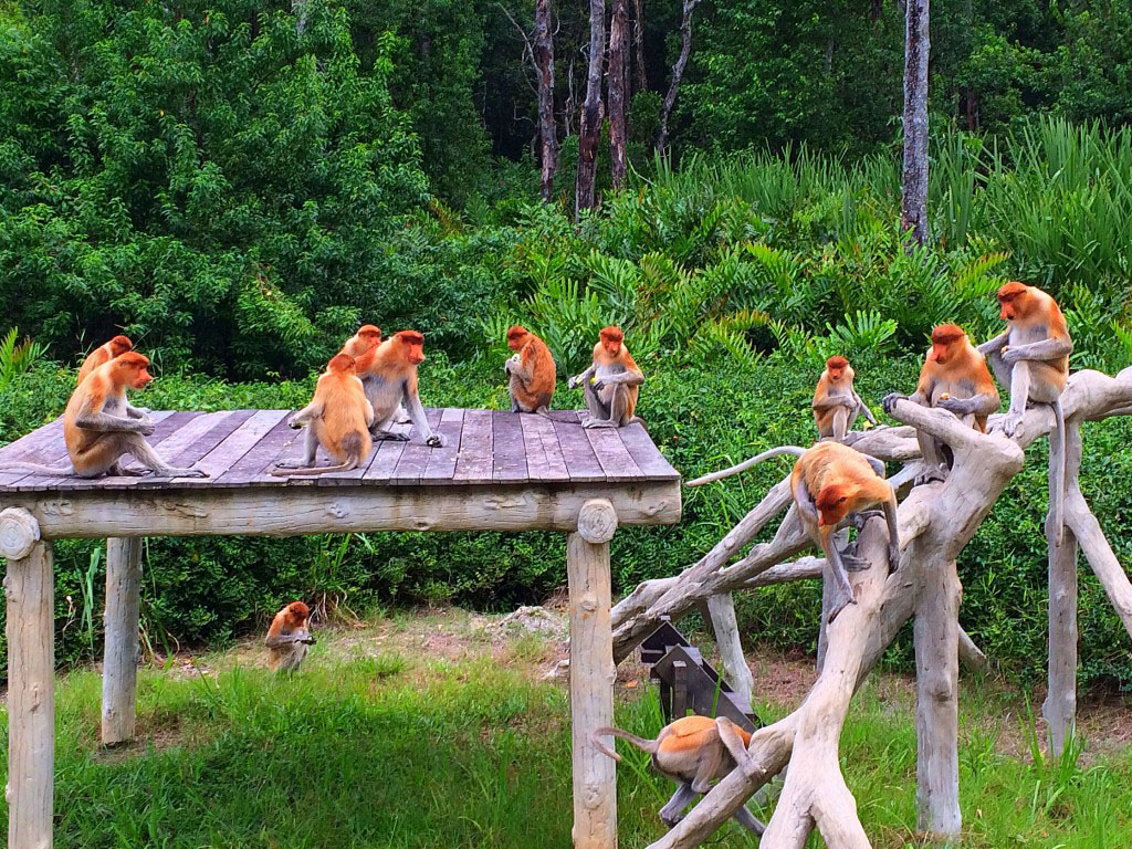 Primates of Borneo