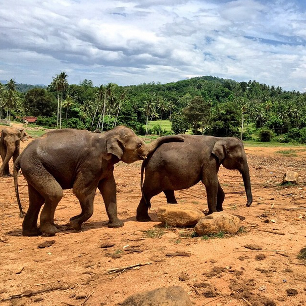 Visiting orphaned elephants with Azamara Club Cruises.