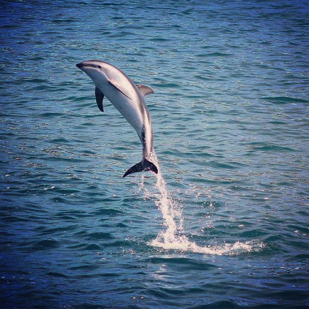Dolphin watching in Kaikoura, New Zealand.