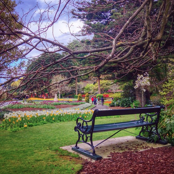 The Wellington Botanic Garden.