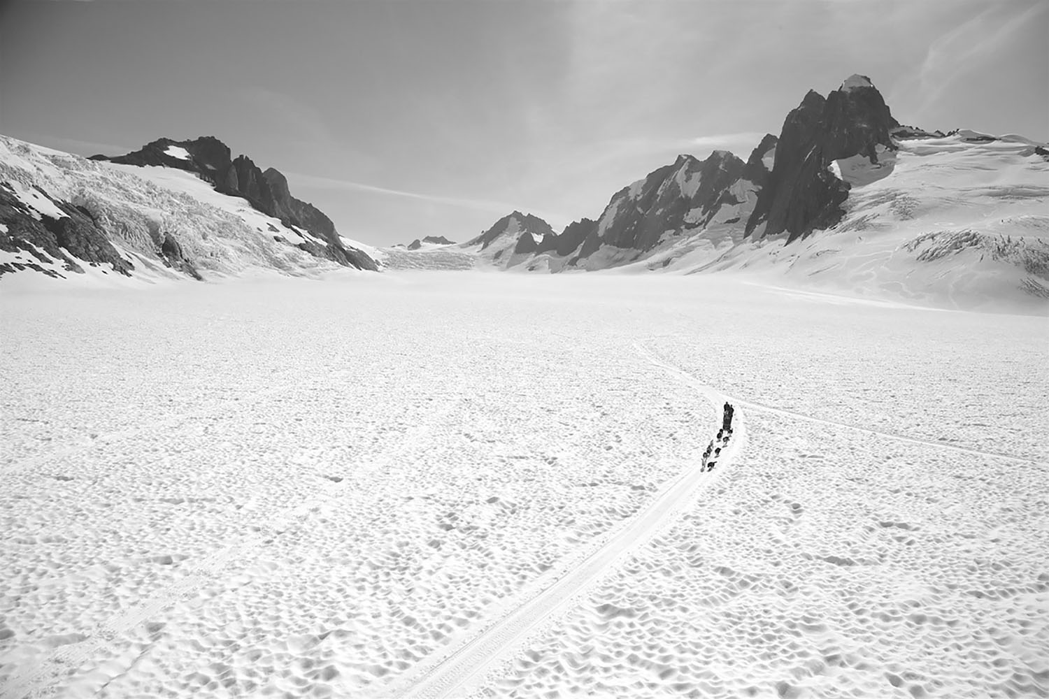 A black and white photo of a dogsledder in Alaska.