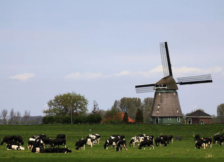 Rural Holland and Amsterdam City Tour