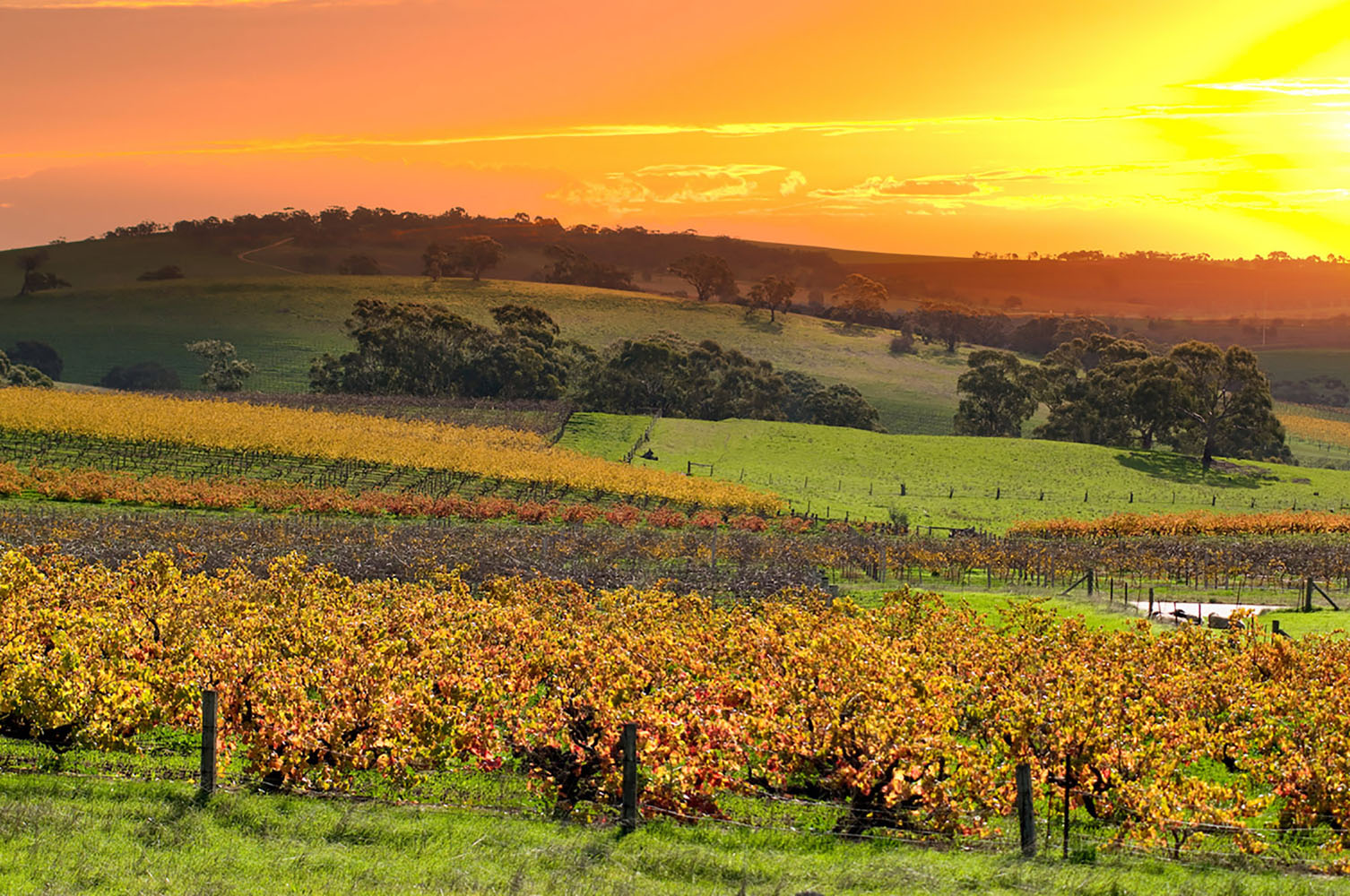 Sunset in the Barossa Valley of Australia's winelands.
