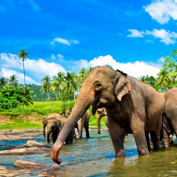 The Top Five Travel Destinations For Animal Lovers