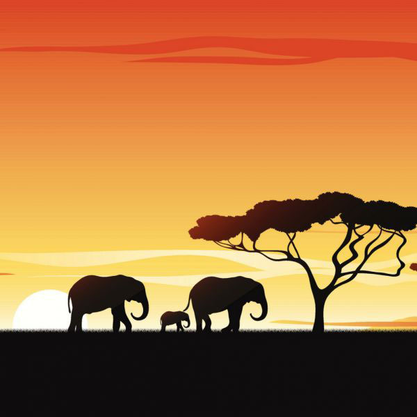 The Big Five and Beyond: Wild for African Wildlife