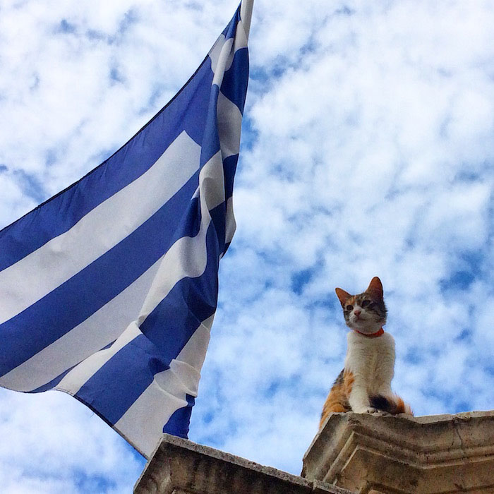 A cat on top of a building next to a Crete flag