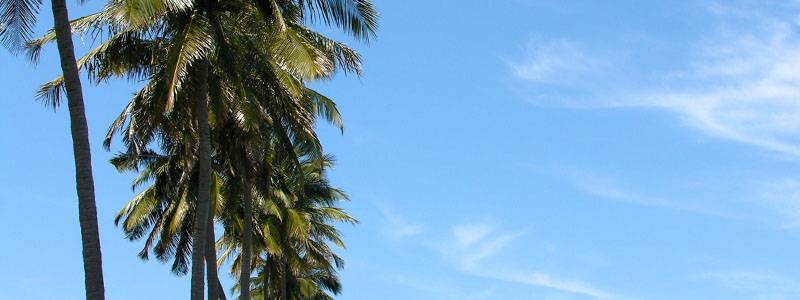 Palm trees along Catembe Beach in Maputo, Mozambique