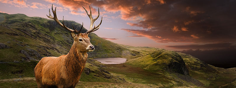 brown buck on mountain under cloudy sky in chacabuco chile