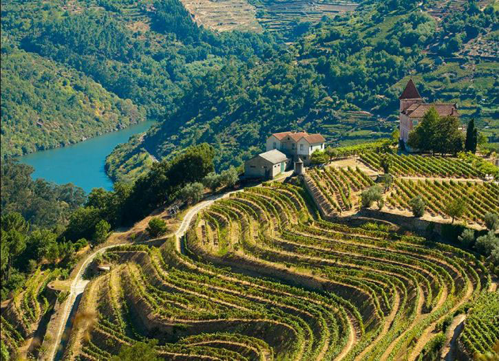 Douro Valley Winery Tour