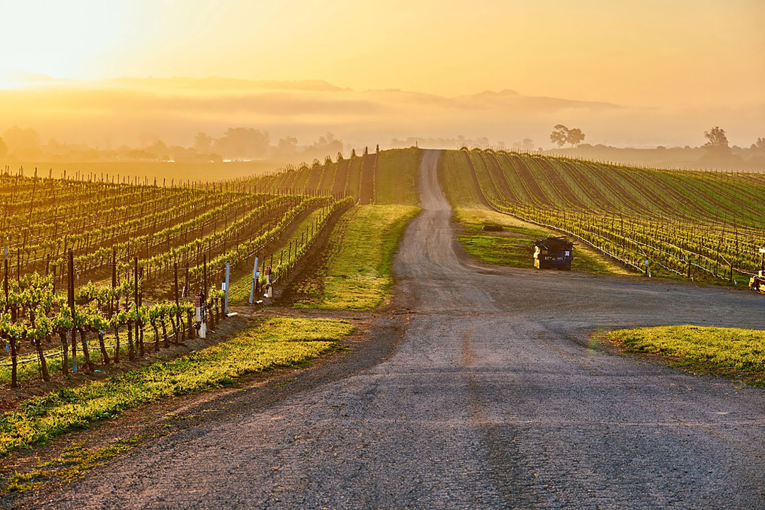 Vineyards at sunrise in Napa Valley, USA