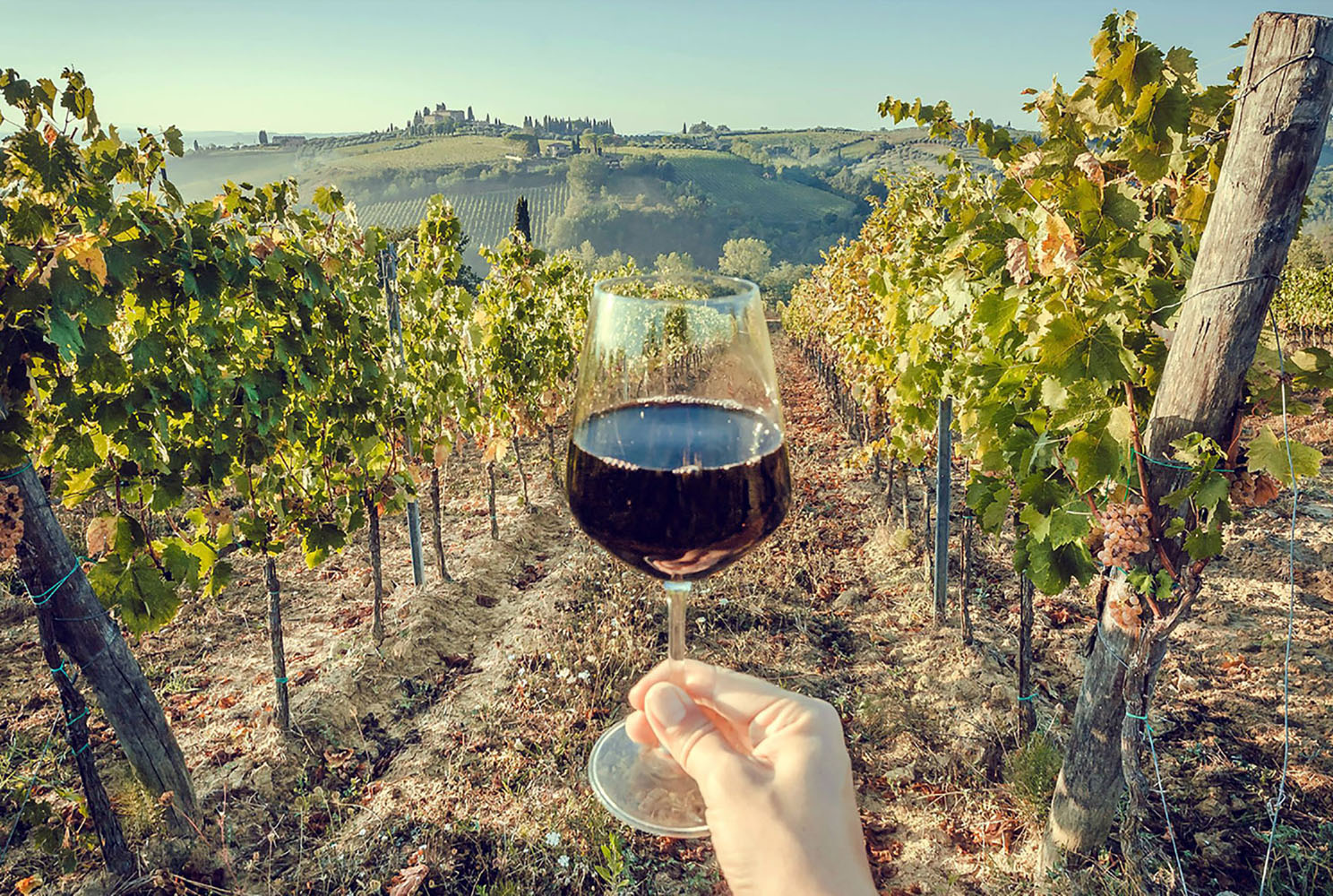 A tourist holds a glass of wine in hand in Tuscany, with green valley of grapes as the background