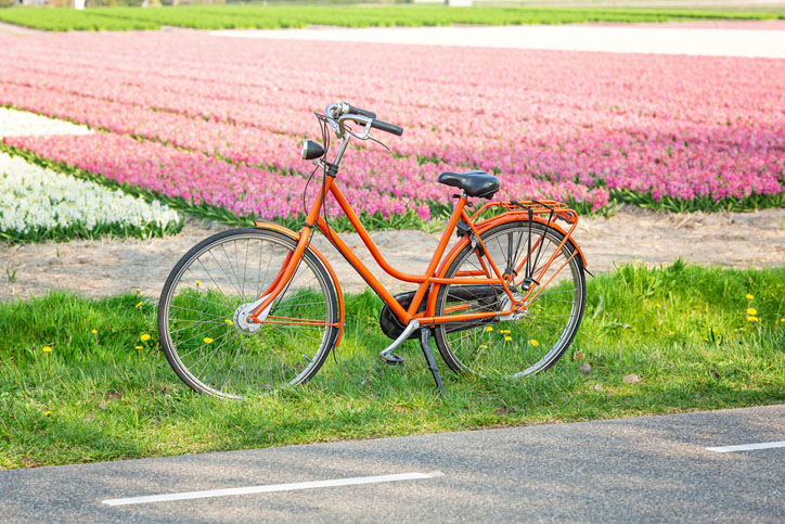 Orange bicycle next to a field of hyacinths.