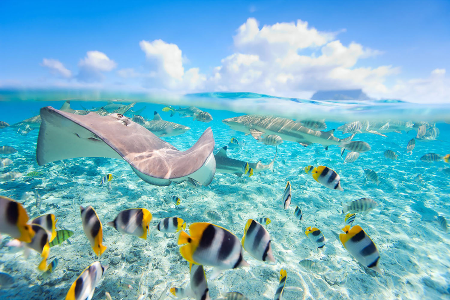Tropical fish and rays swim underwater off the coast of French Polynesia