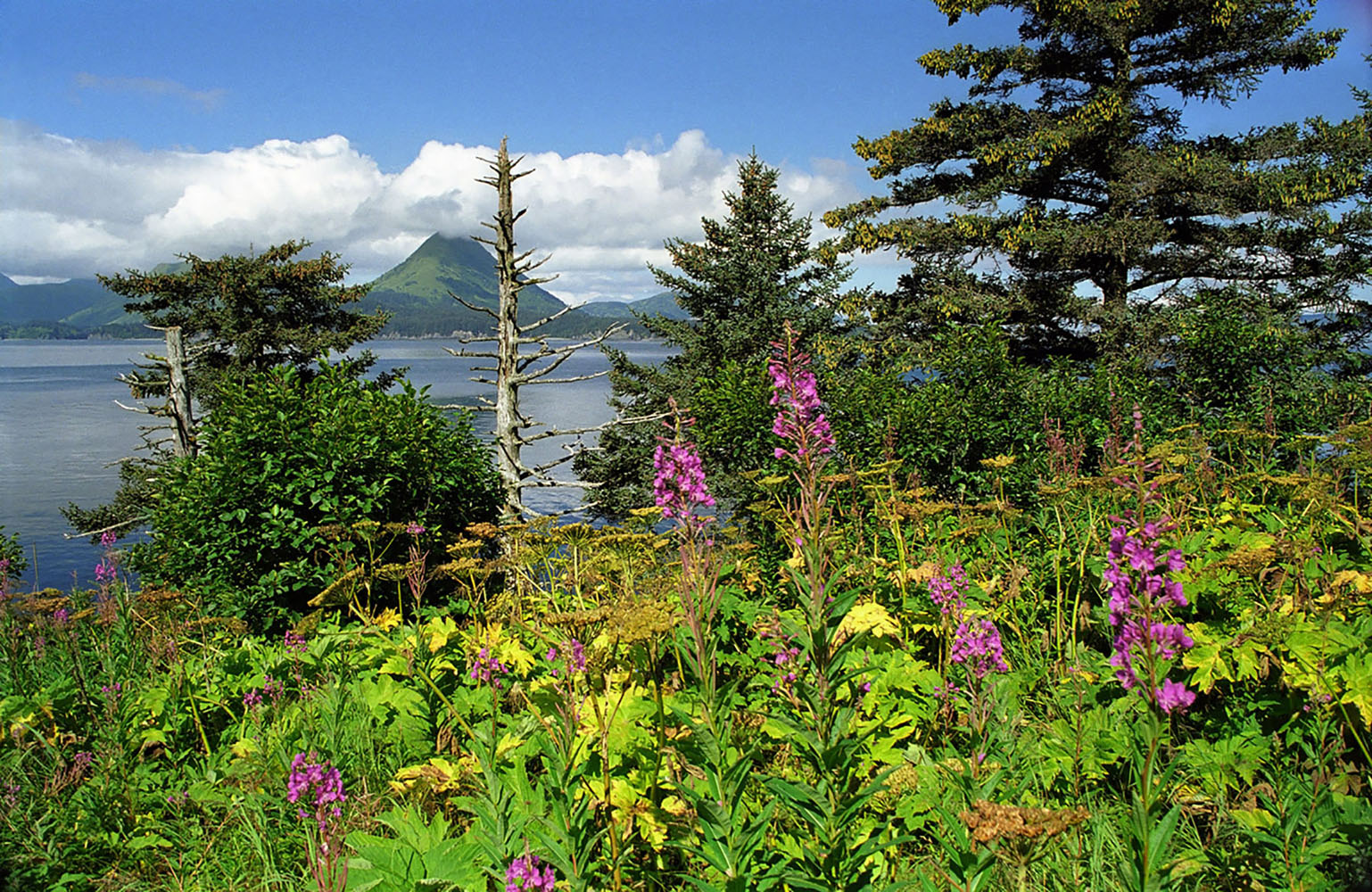 Mountains in the distance in Ambercrombie State Park in Alaska