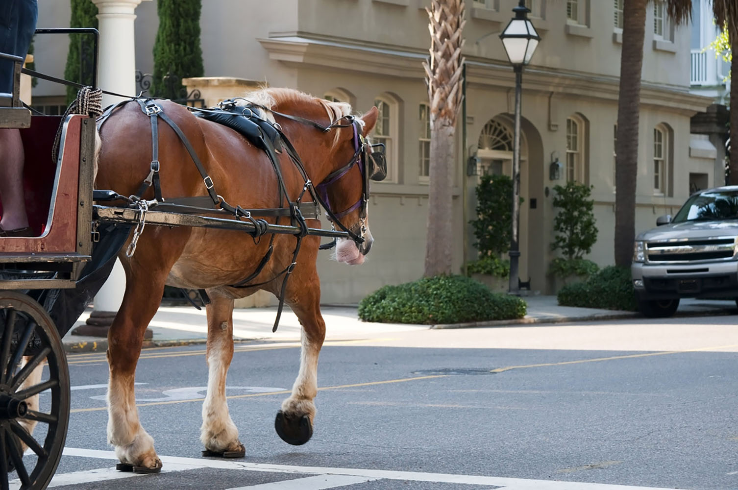 A horse-drawn carriage in Charleston, South Carolina