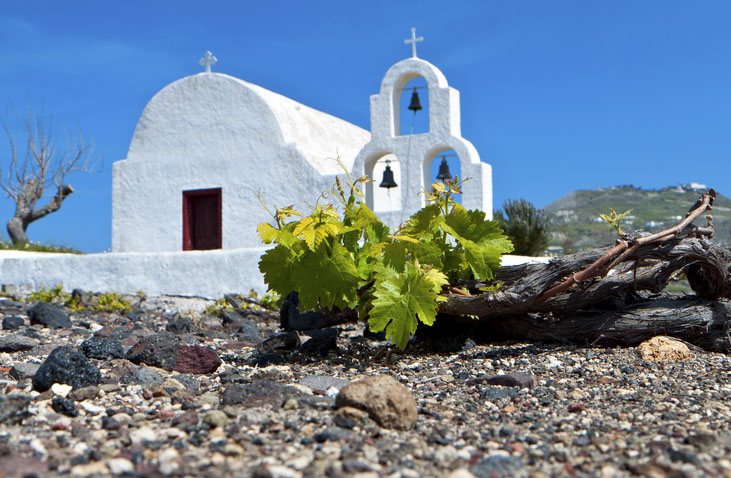 Grape field in Santorini with church in the background