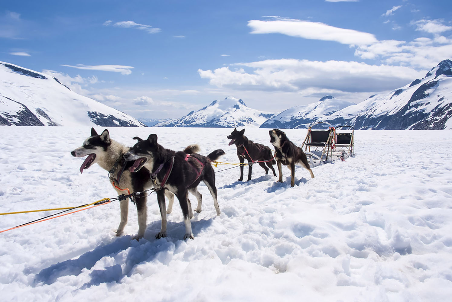 Dog-sledding is an unforgettable adventure in Alaska!