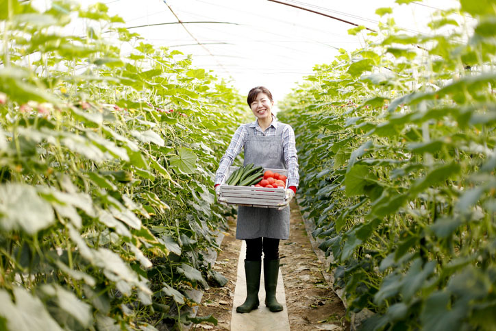 A lady harvests vegetables in Japan
