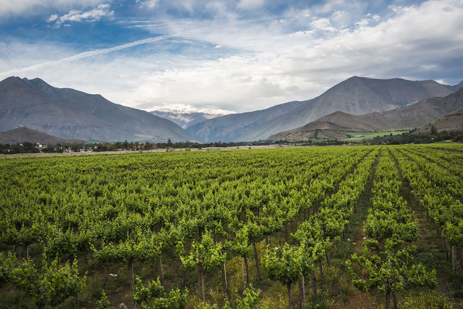 Vineyards in Chile.