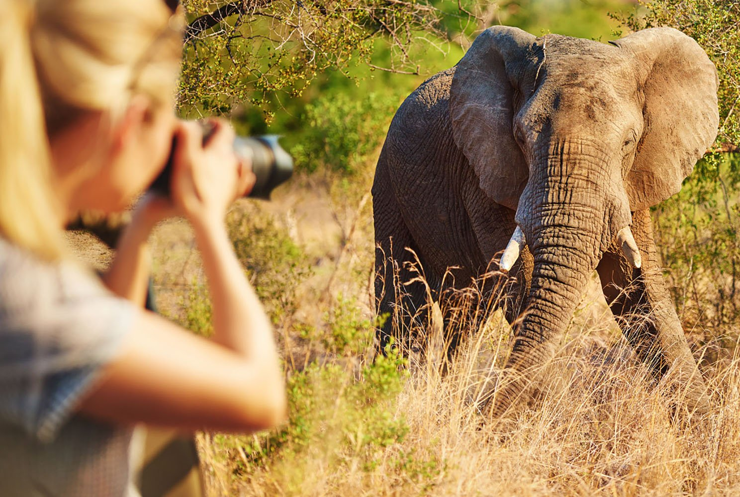 A woman photographing at elephant during an African safari.