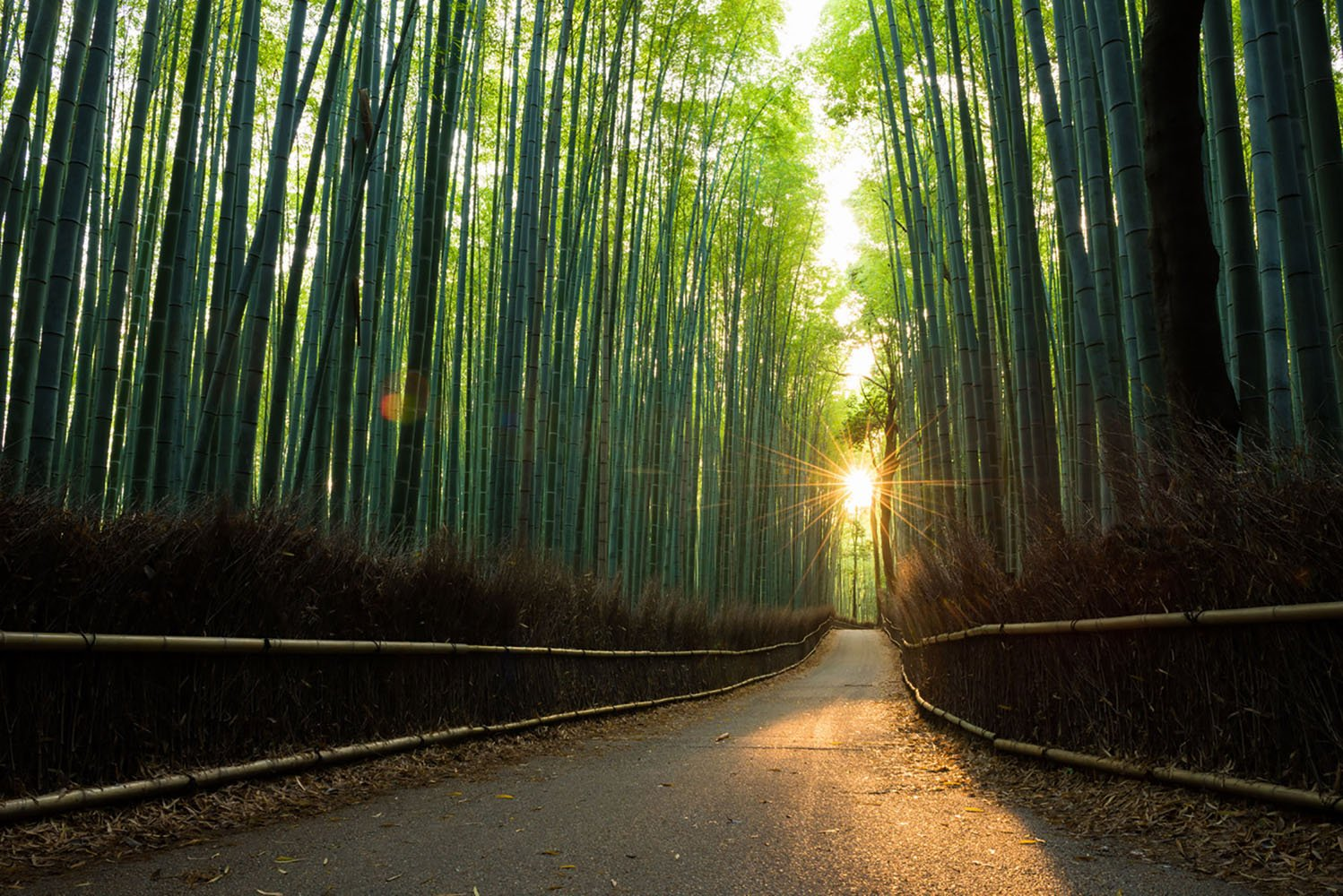 Arashiyama Bamboo Grove at Sunrise