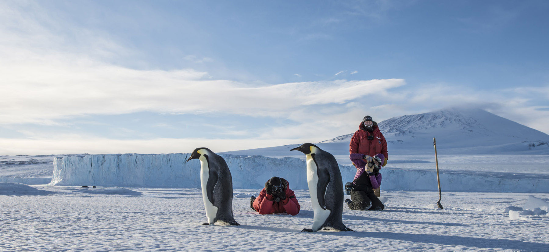 Photographers snap images of penguins in Antarctica.
