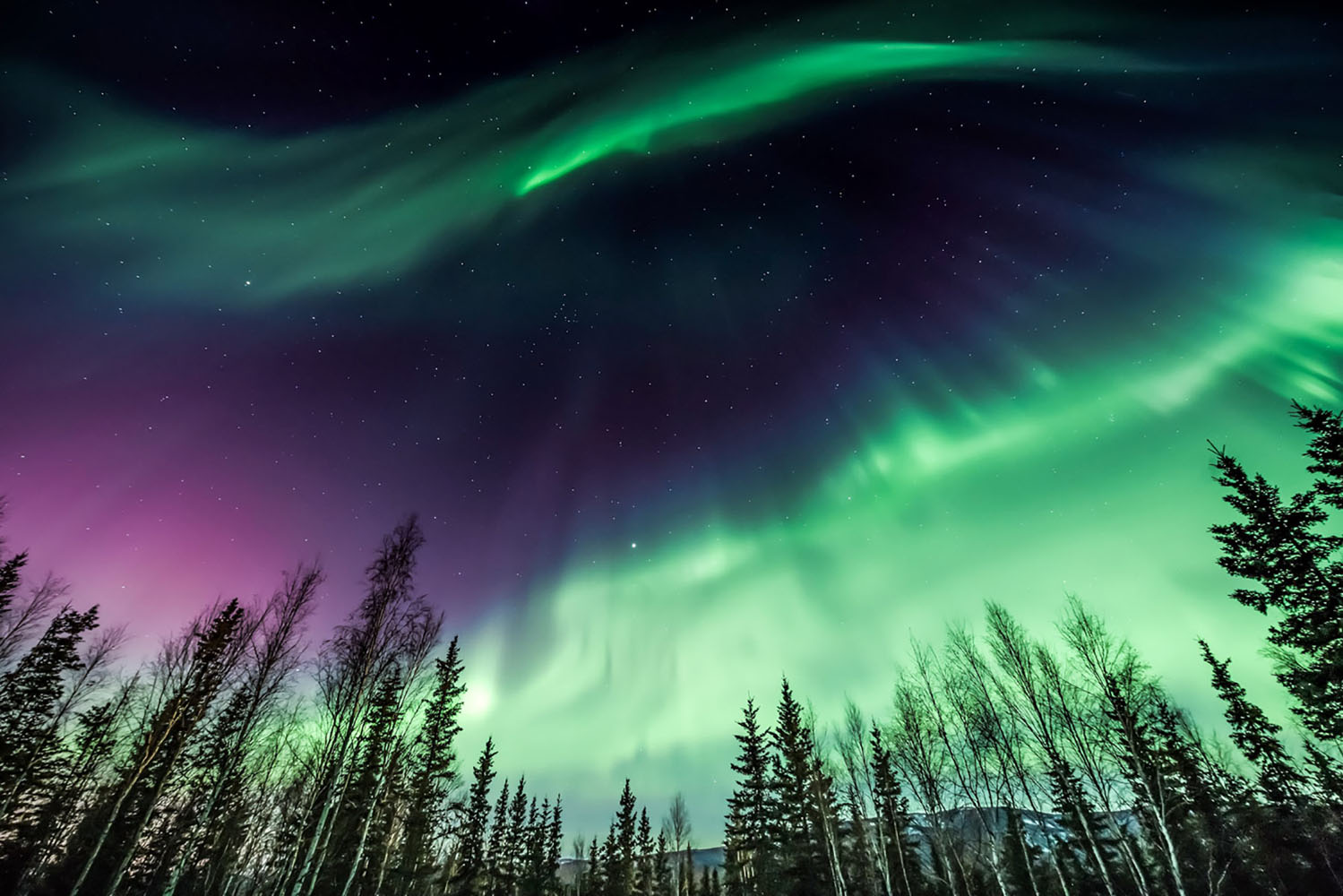 Aurora borealis over tree line in Alaska