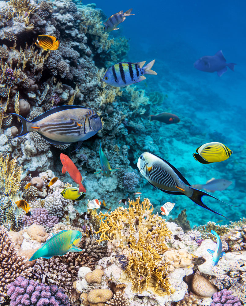 Tropical fish swim near a colorful coral reef