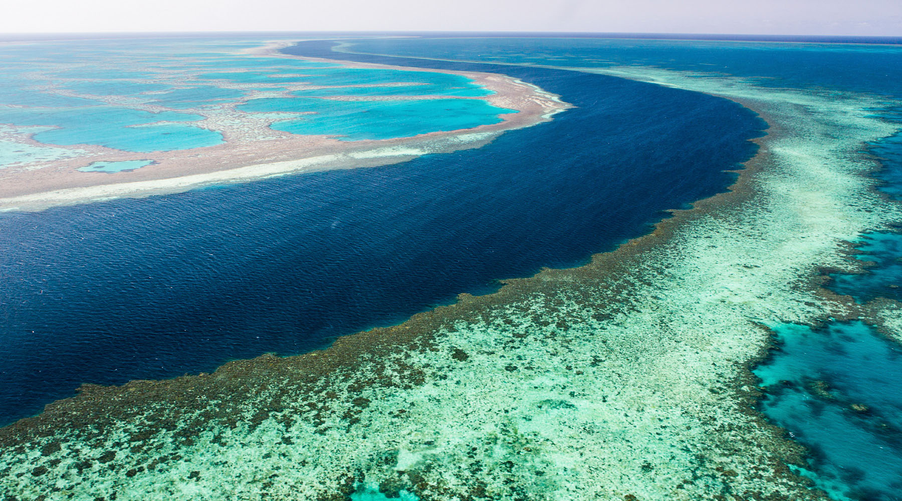 Your voyage from Australia to Asia isn't complete without seeing The Great Barrier Reef—one of the Seven Wonders of the World.