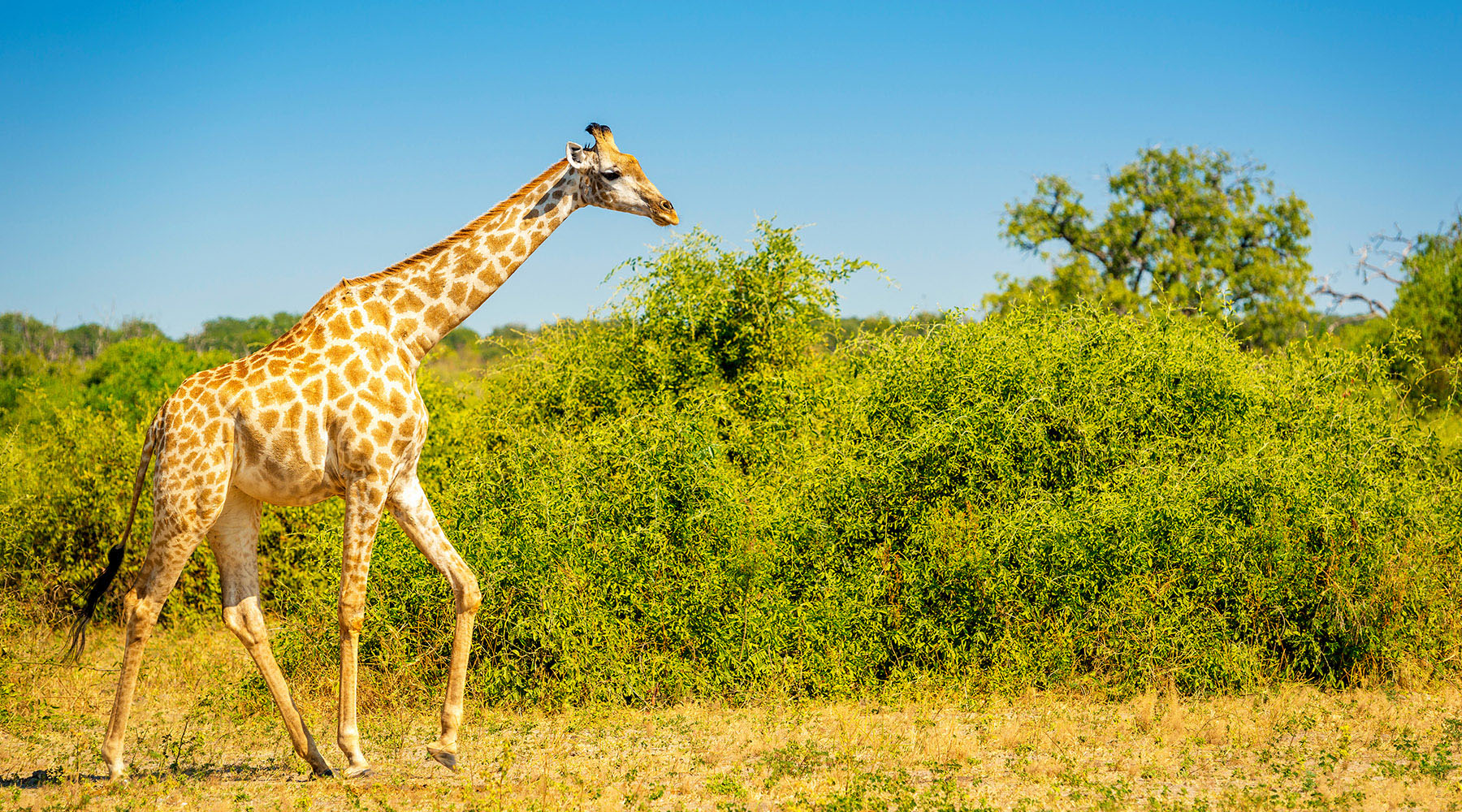10-Night S. Africa & 5-Night Post Micato Safari