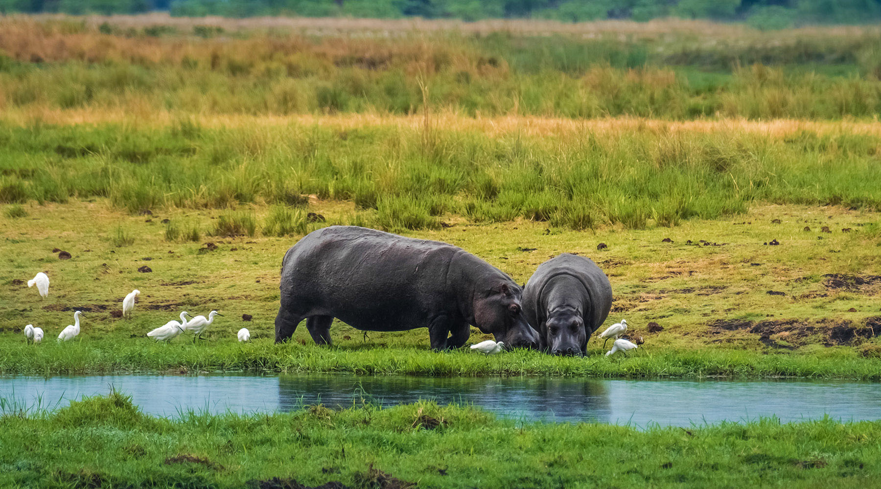 15-Night S. Africa & 5-Night Post Micato Safari