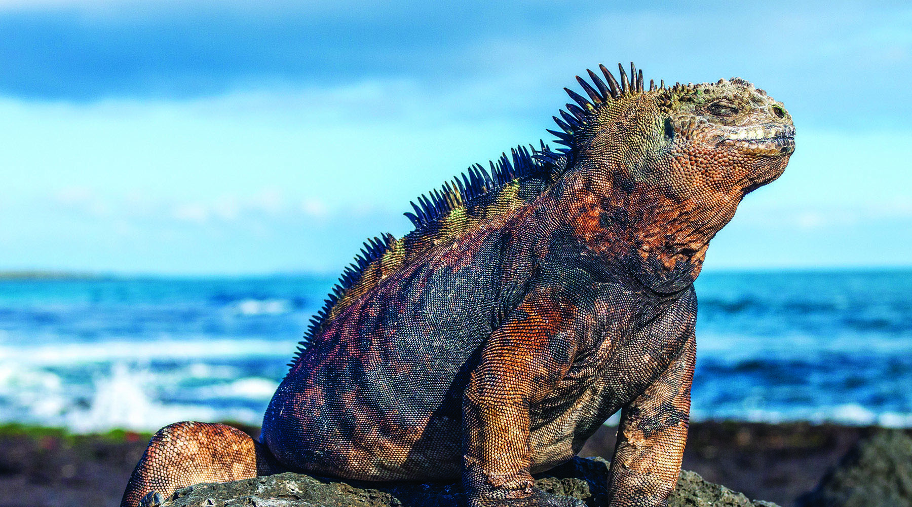 10-Night S.america & 10-Night Post Celebrity Galapagos