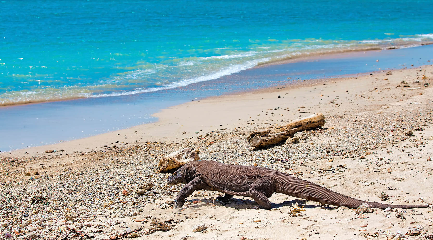 Inside the Komodo Dragon Adventure Tour