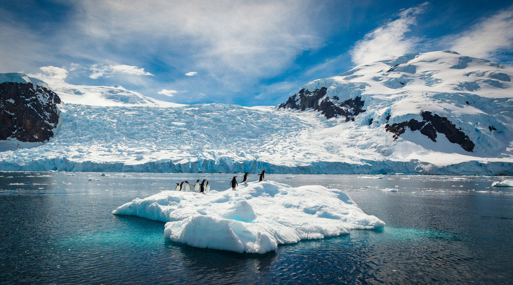 A group of penguins huddle on an iceberg in Antarctica.