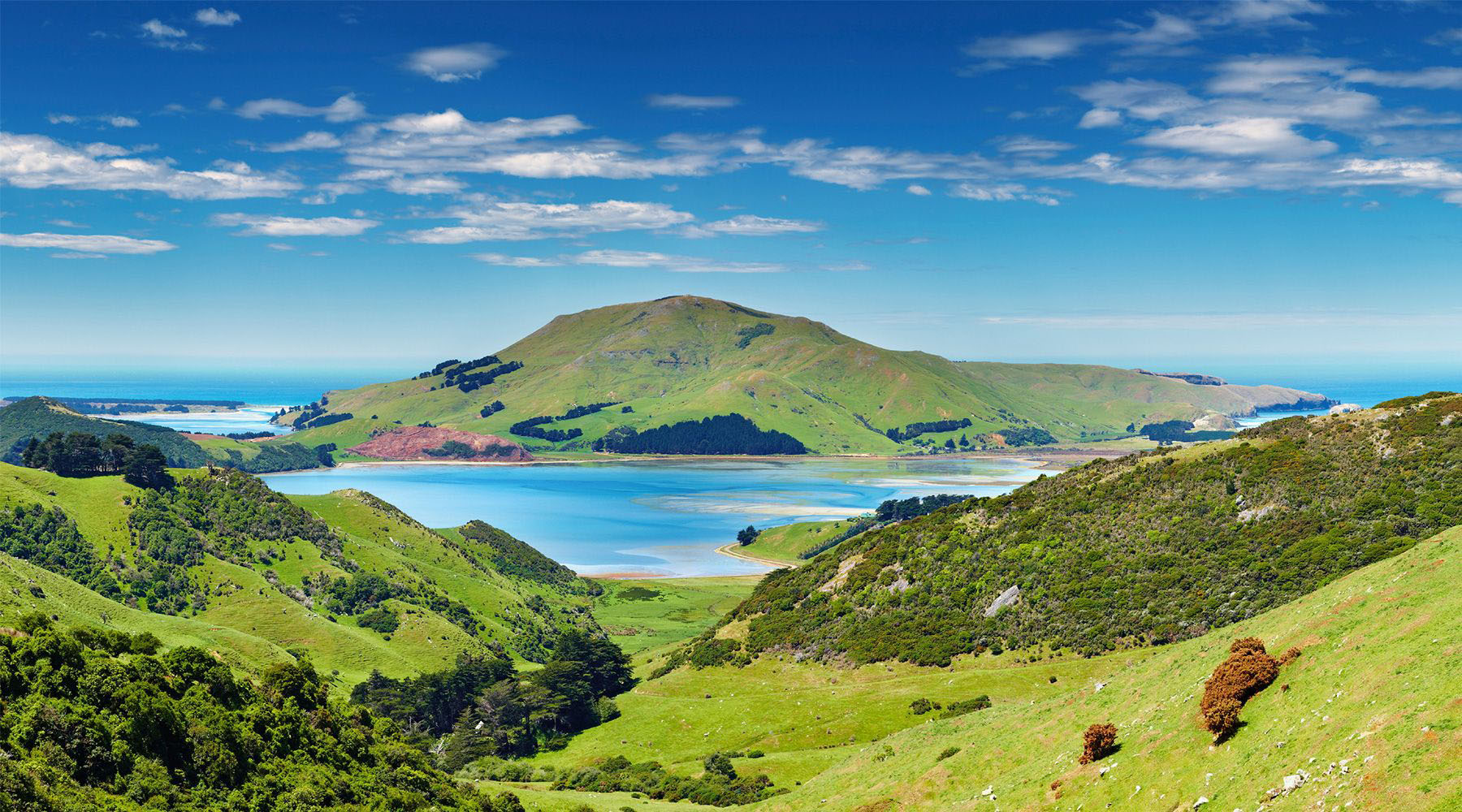 Exploring Dunedin and New Zealand's Otago Peninsula