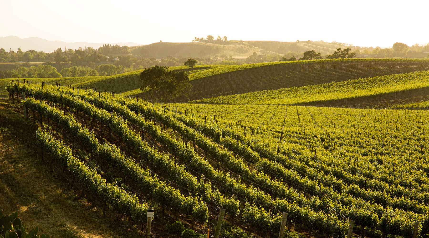7-NIGHT CALIFORNIA WINE ADVENTURE VOYAGE