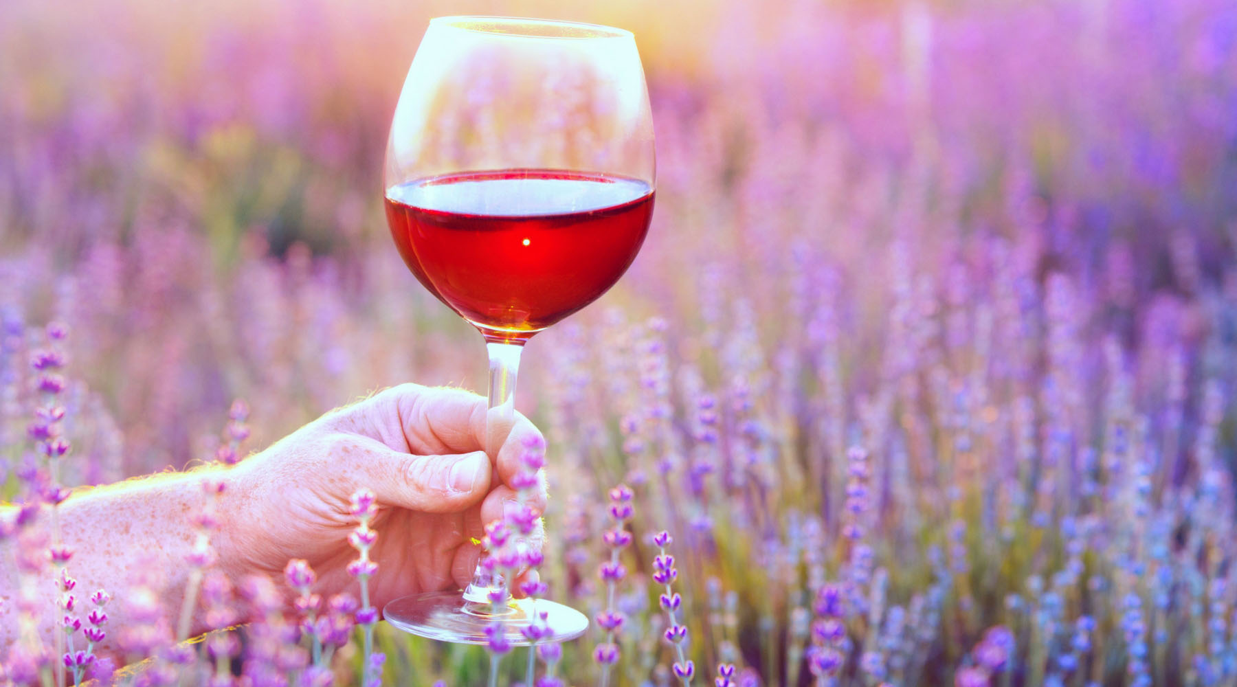 A woman holds a glass of rose wine in front of a field of lavender.