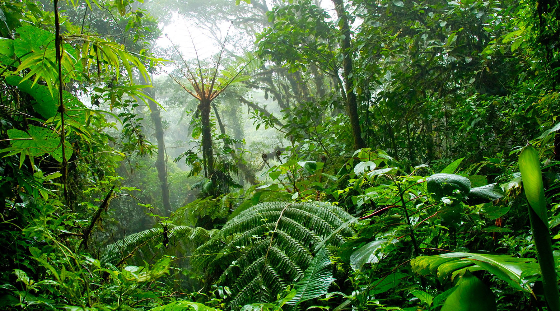 Just outside Puntarenas, the Monteverde Cloud Forest is home to over 100 species of mammals, 400 species of birds, and 2,500 species of plants.