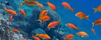 Fish swimming in the sea
