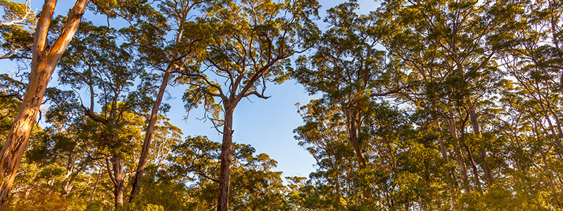 Tuart Forest National Park