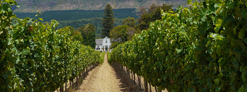 Wine Tasting in the Cape Winelands